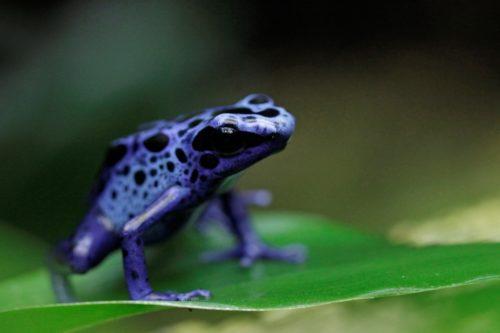 Crocodile Lézard immense comme la vie Reptile Tierfigur Personnage jardin personnage